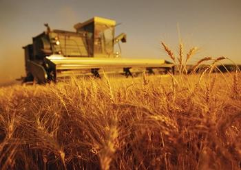 Algeria_agriculture