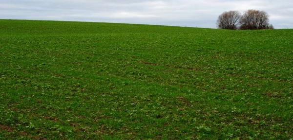 žalias laukas rudenį